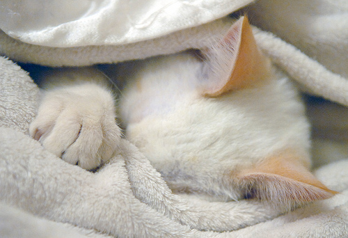 Blog_Sleepy cat